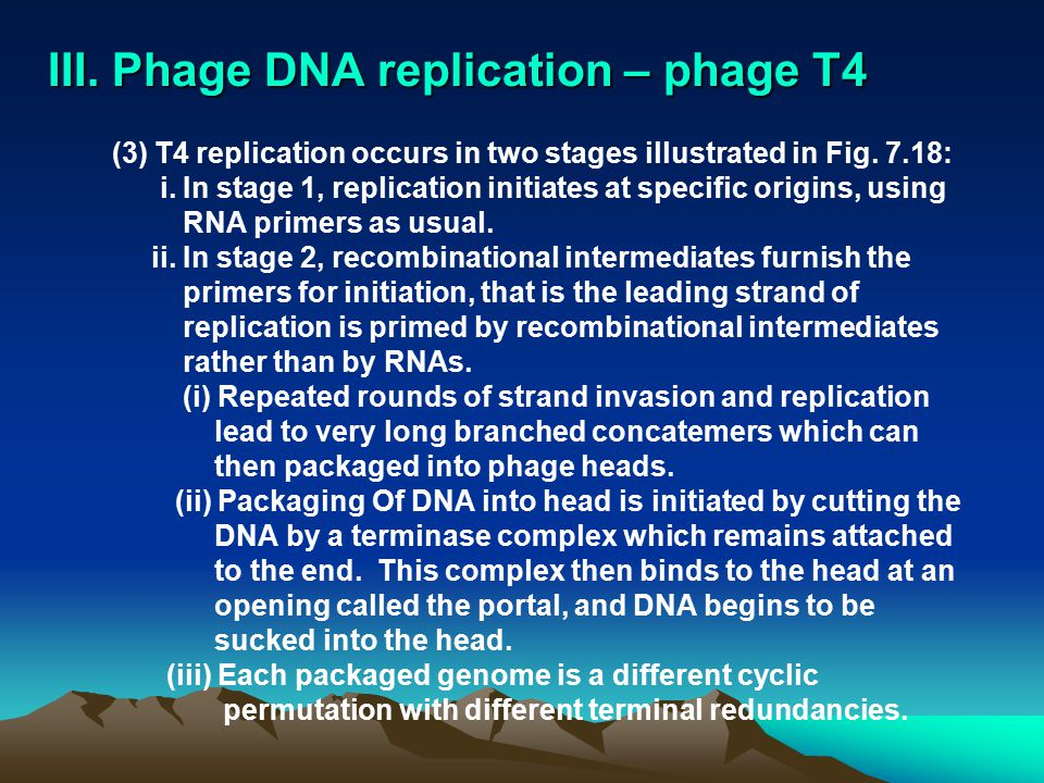 III. Phage DNA replication – phage T4