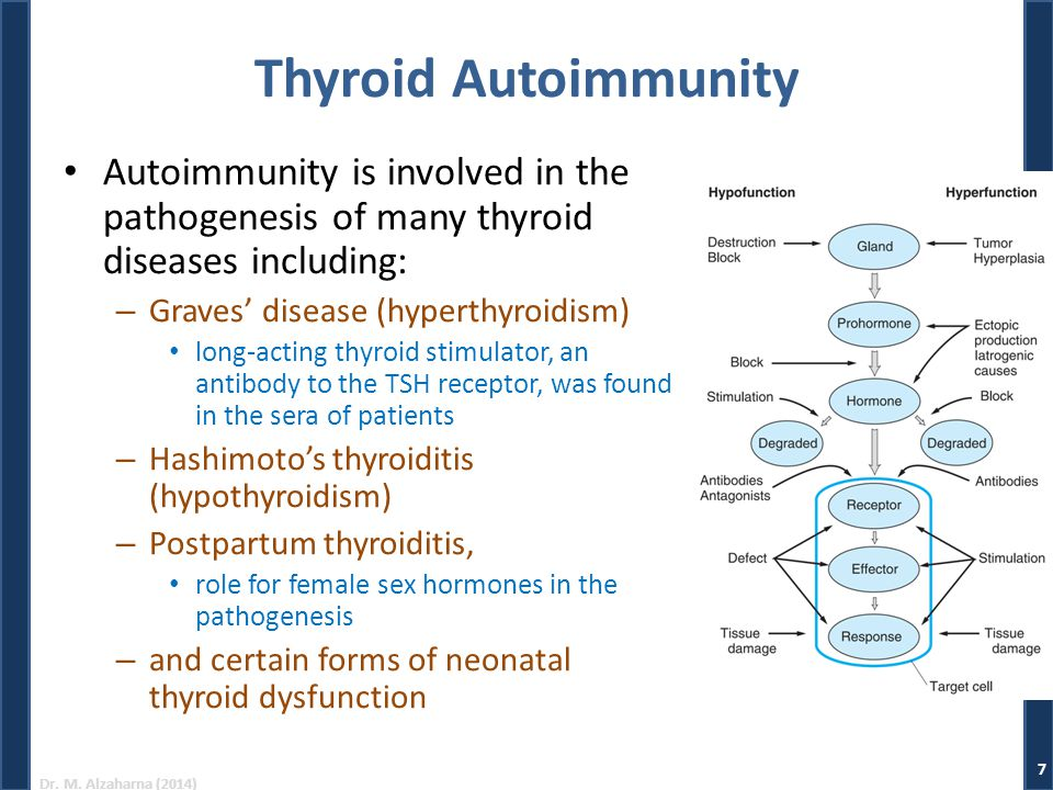 Thyroid Autoimmunity Autoimmunity is involved in the pathogenesis of many thyroid diseases including: