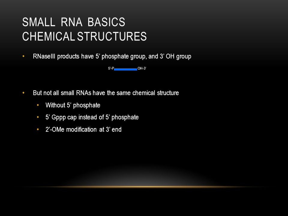 Small RNA Basics chemical structures