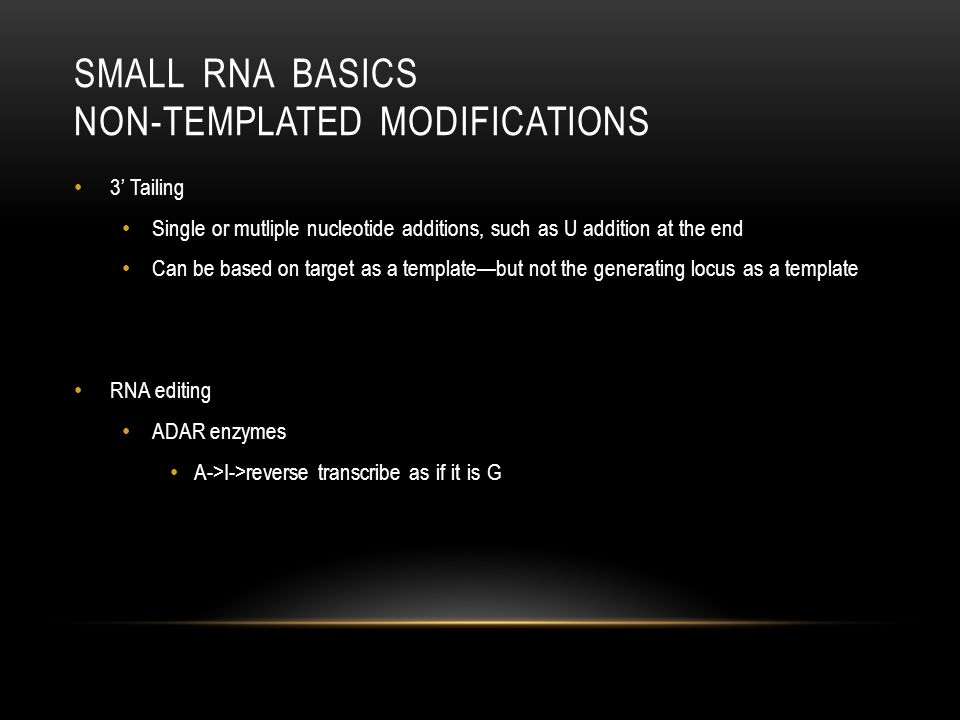 Small RNA Basics Non-templated modifications
