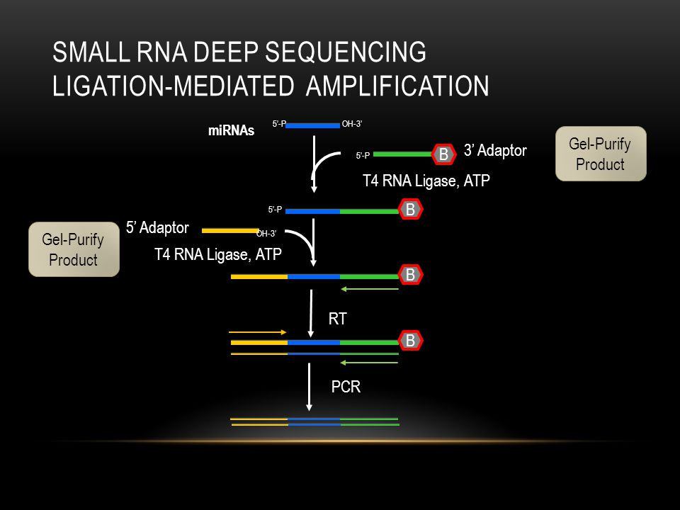 Small RNA deep Sequencing Ligation-mediated AMPlification