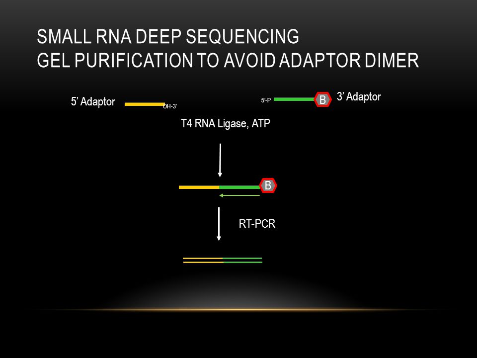 Small RNA deep Sequencing Gel purification to avoid adaptor Dimer