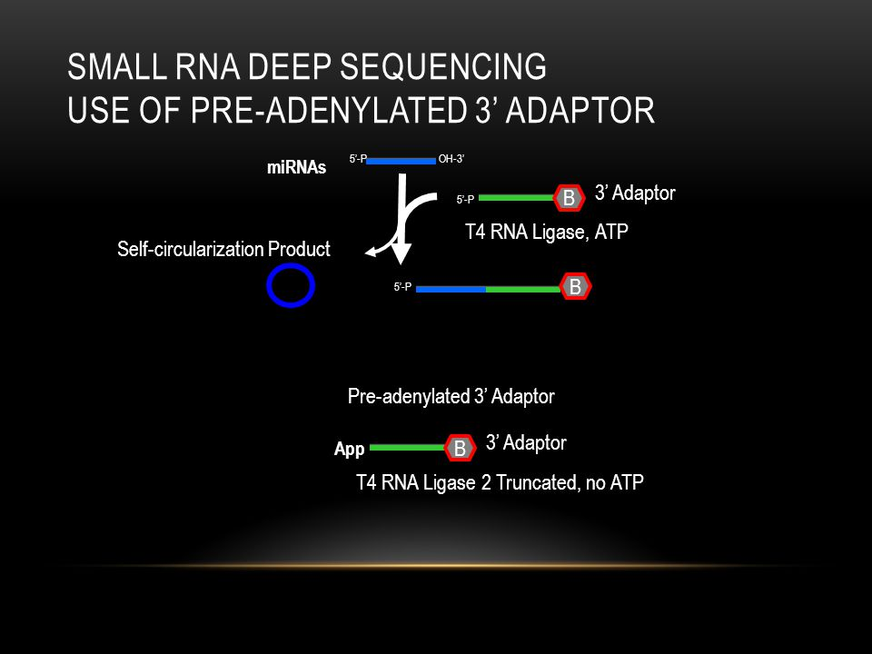 Small RNA deep Sequencing Use of Pre-adenylated 3' adaptor