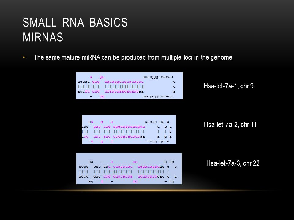 Small RNA Basics miRNAs