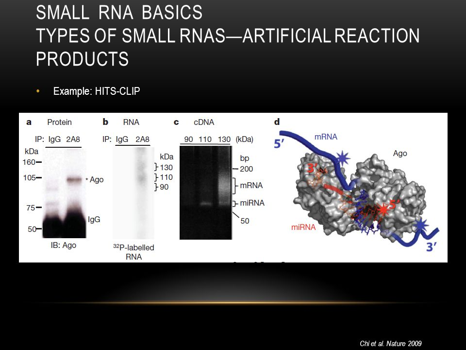 Small RNA Basics Types of small RNAs—artificial Reaction Products