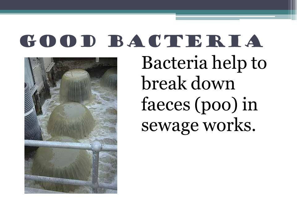 Bacteria help to break down faeces (poo) in sewage works.