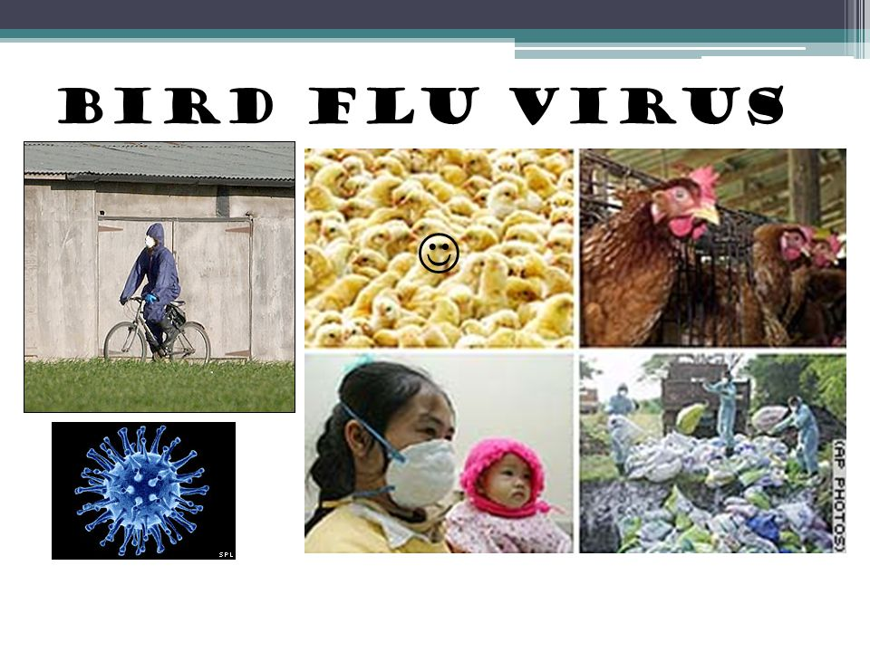 Bird flu virus 