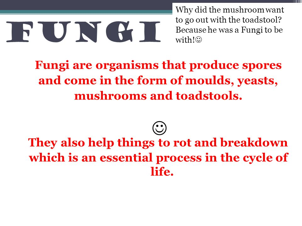 Fungi  Fungi are organisms that produce spores