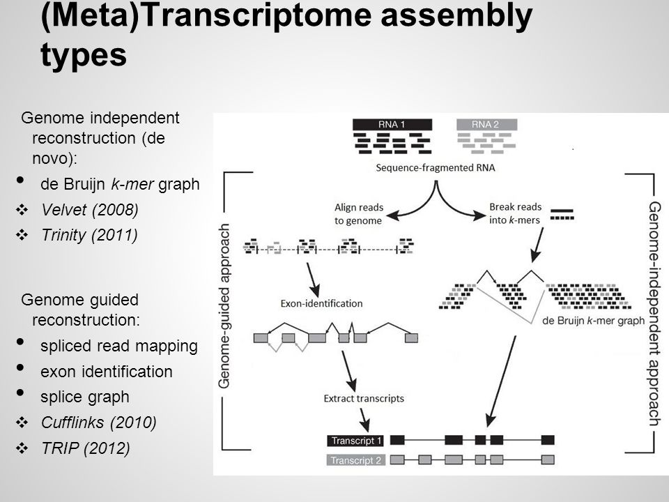 (Meta)Transcriptome assembly types