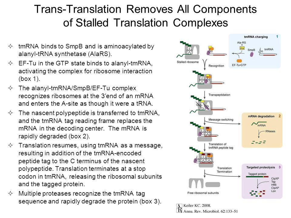 Trans-Translation Removes All Components of Stalled Translation Complexes