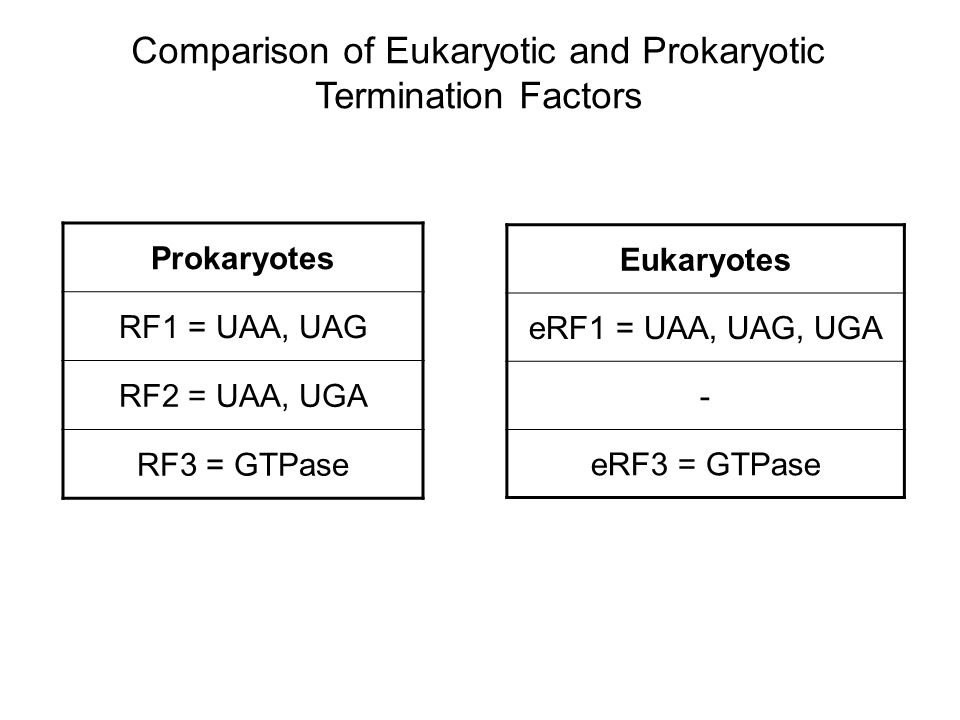 Comparison of Eukaryotic and Prokaryotic Termination Factors