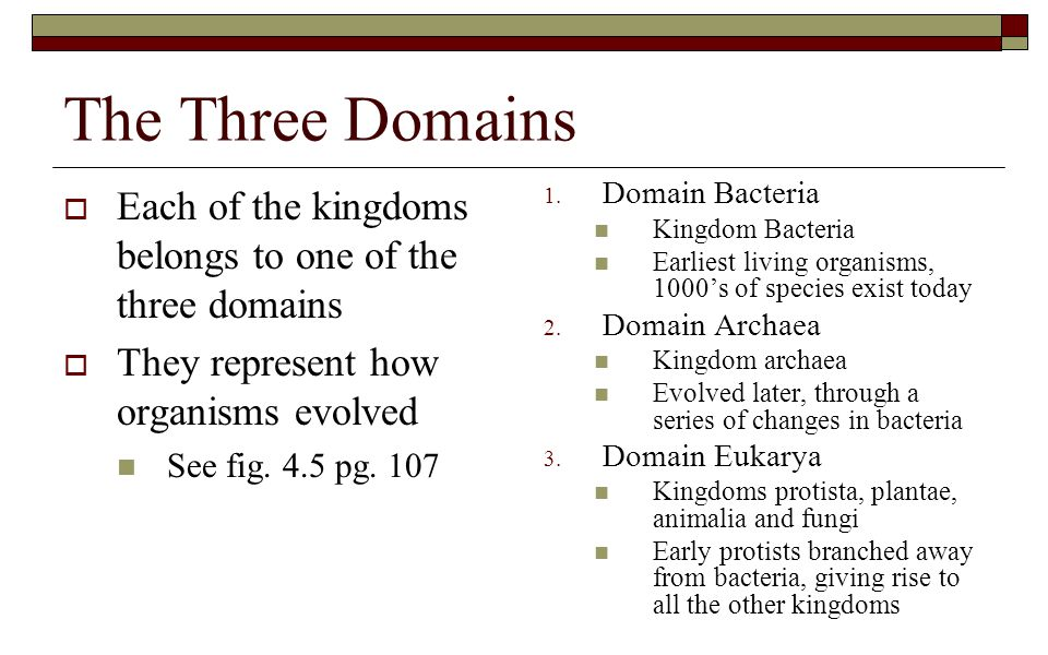 The Three Domains Each of the kingdoms belongs to one of the three domains. They represent how organisms evolved.