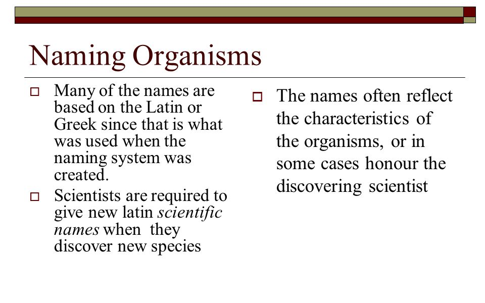 Naming Organisms Many of the names are based on the Latin or Greek since that is what was used when the naming system was created.