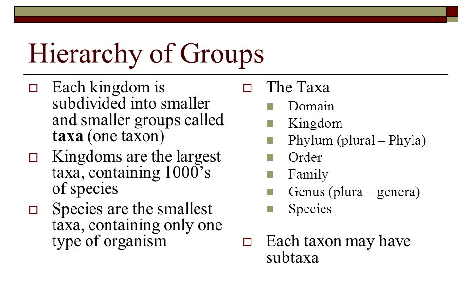 Hierarchy of Groups Each kingdom is subdivided into smaller and smaller groups called taxa (one taxon)