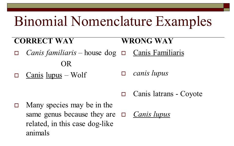 Binomial Nomenclature Examples