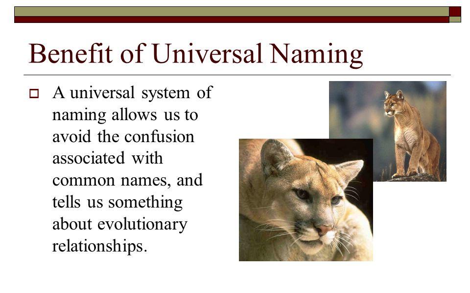 Benefit of Universal Naming