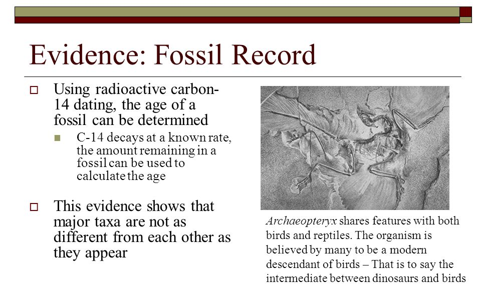 Evidence: Fossil Record