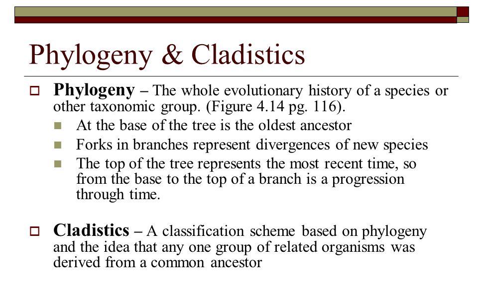 Phylogeny & Cladistics