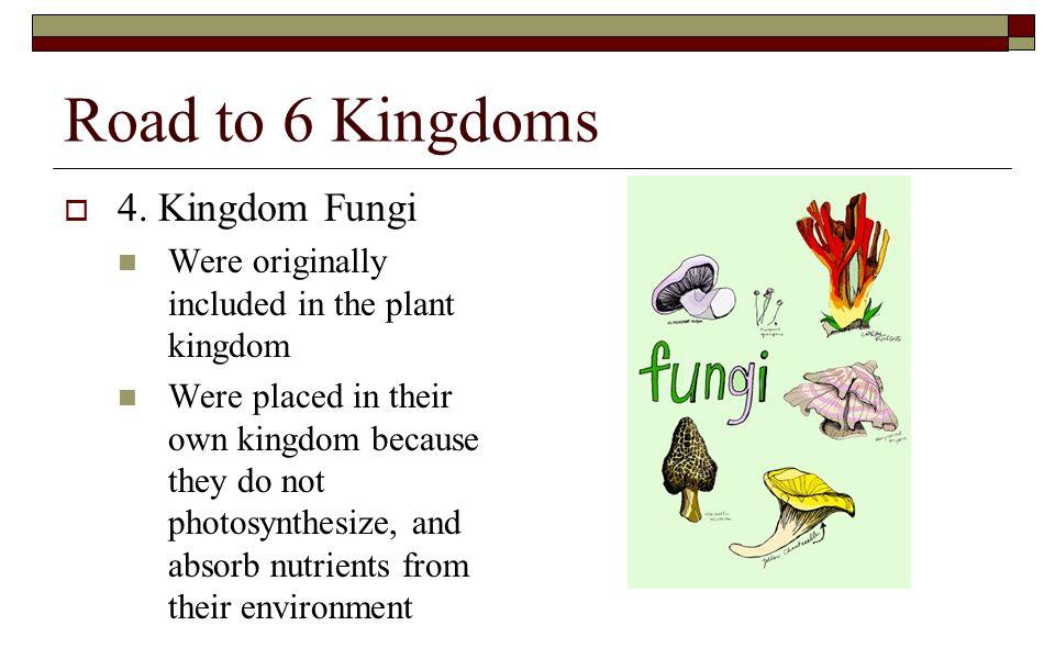 Road to 6 Kingdoms 4. Kingdom Fungi