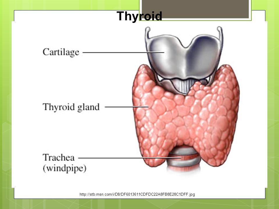 Thyroid http://stb.msn.com/i/D8/DF6013611CDFDC22A8FB8E28C1DFF.jpg