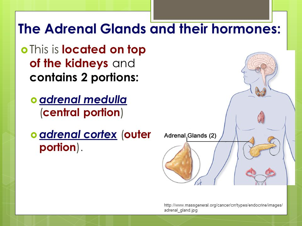 The Adrenal Glands and their hormones: