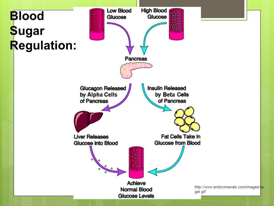 Blood Sugar Regulation: