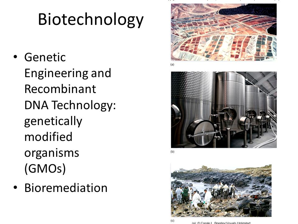 Biotechnology Genetic Engineering and Recombinant DNA Technology: genetically modified organisms (GMOs)