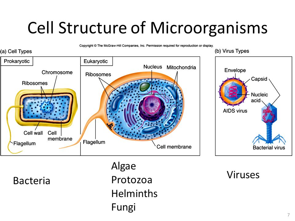 Main themes of microbiology ppt video online download 7 cell structure of microorganisms algae protozoa helminths fungi viruses bacteria cell structure of microorganisms ccuart Choice Image