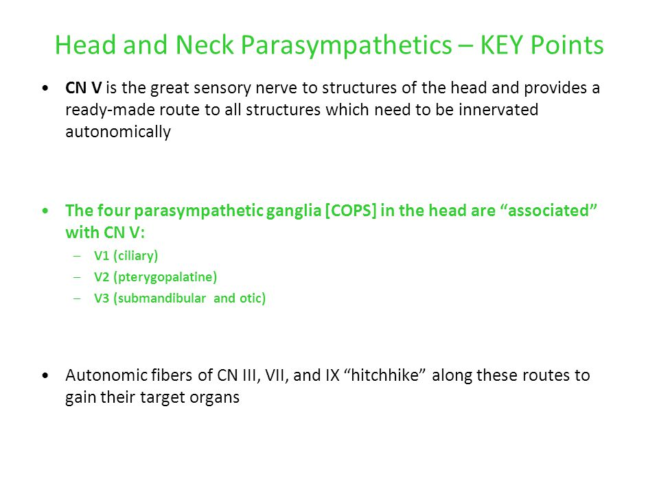 Head and Neck Parasympathetics – KEY Points