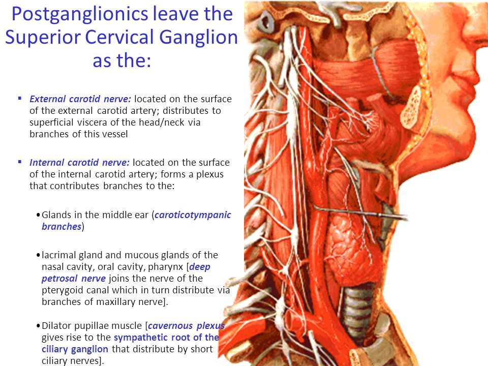 Postganglionics leave the Superior Cervical Ganglion as the: