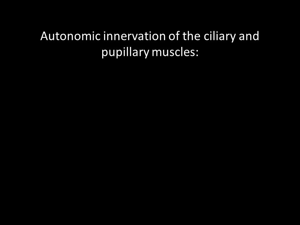 Autonomic innervation of the ciliary and pupillary muscles: