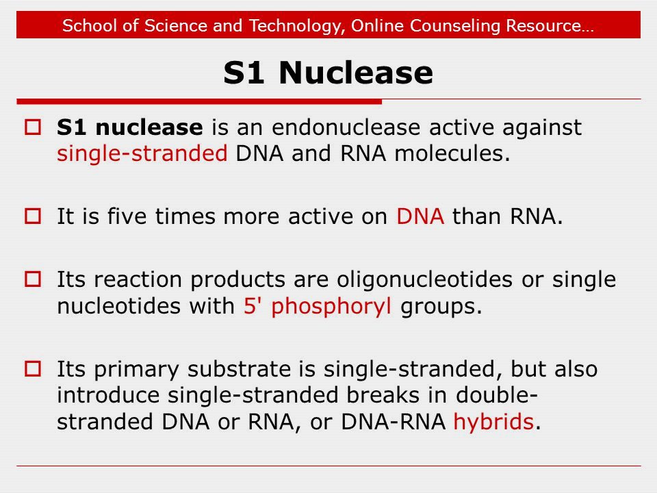 S1 Nuclease S1 nuclease is an endonuclease active against single-stranded DNA and RNA molecules. It is five times more active on DNA than RNA.