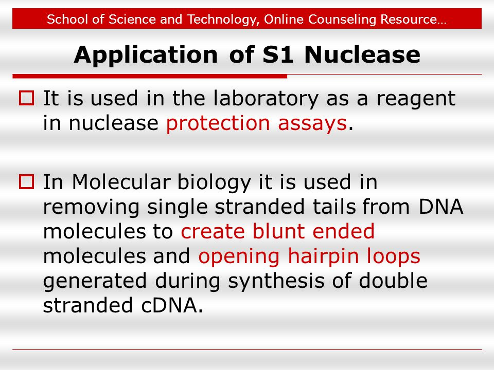 Application of S1 Nuclease