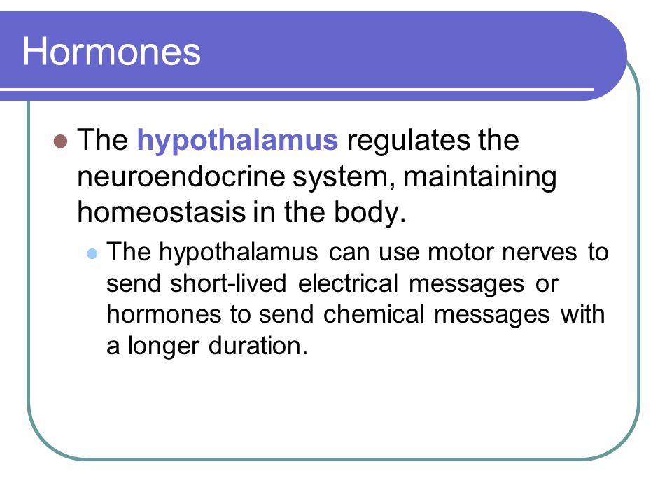 Hormones The hypothalamus regulates the neuroendocrine system, maintaining homeostasis in the body.