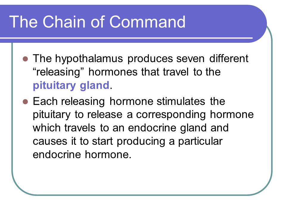 The Chain of Command The hypothalamus produces seven different releasing hormones that travel to the pituitary gland.