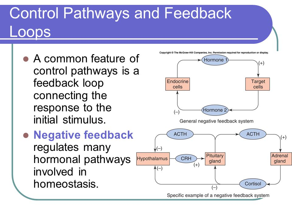 Control Pathways and Feedback Loops
