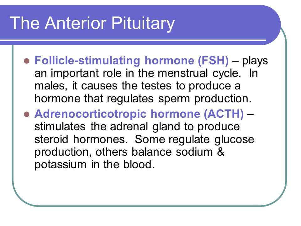 The Anterior Pituitary