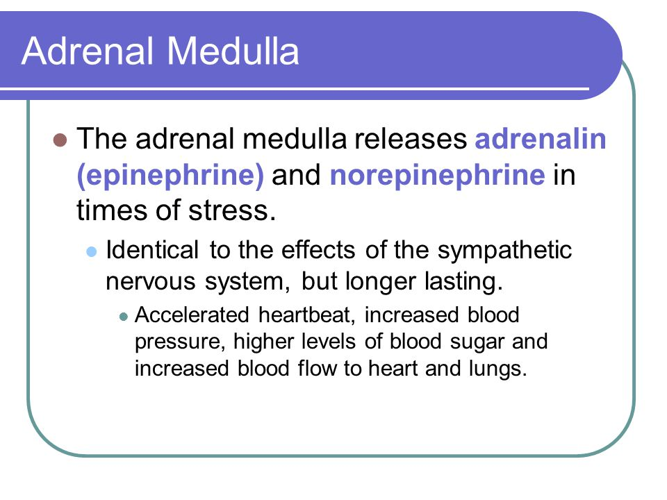 Adrenal Medulla The adrenal medulla releases adrenalin (epinephrine) and norepinephrine in times of stress.