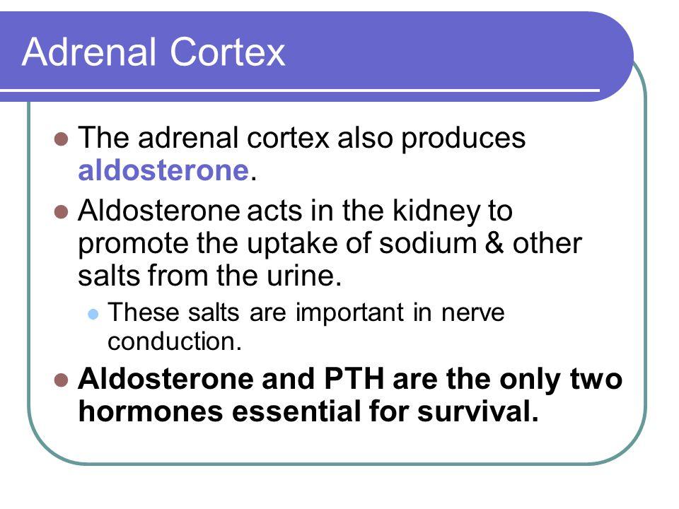 Adrenal Cortex The adrenal cortex also produces aldosterone.