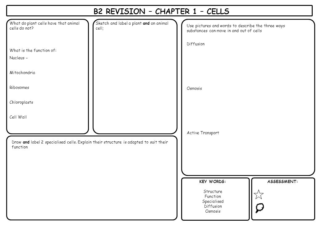 B2 REVISION – CHAPTER 1 – CELLS