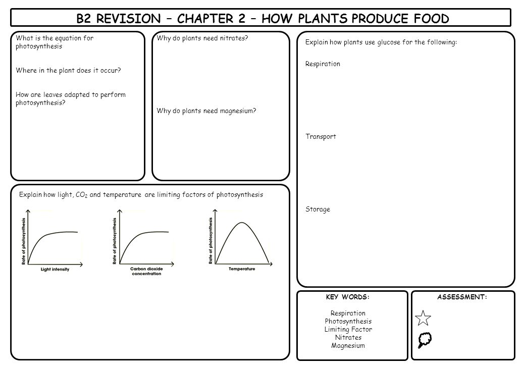 B2 REVISION – CHAPTER 2 – HOW PLANTS PRODUCE FOOD
