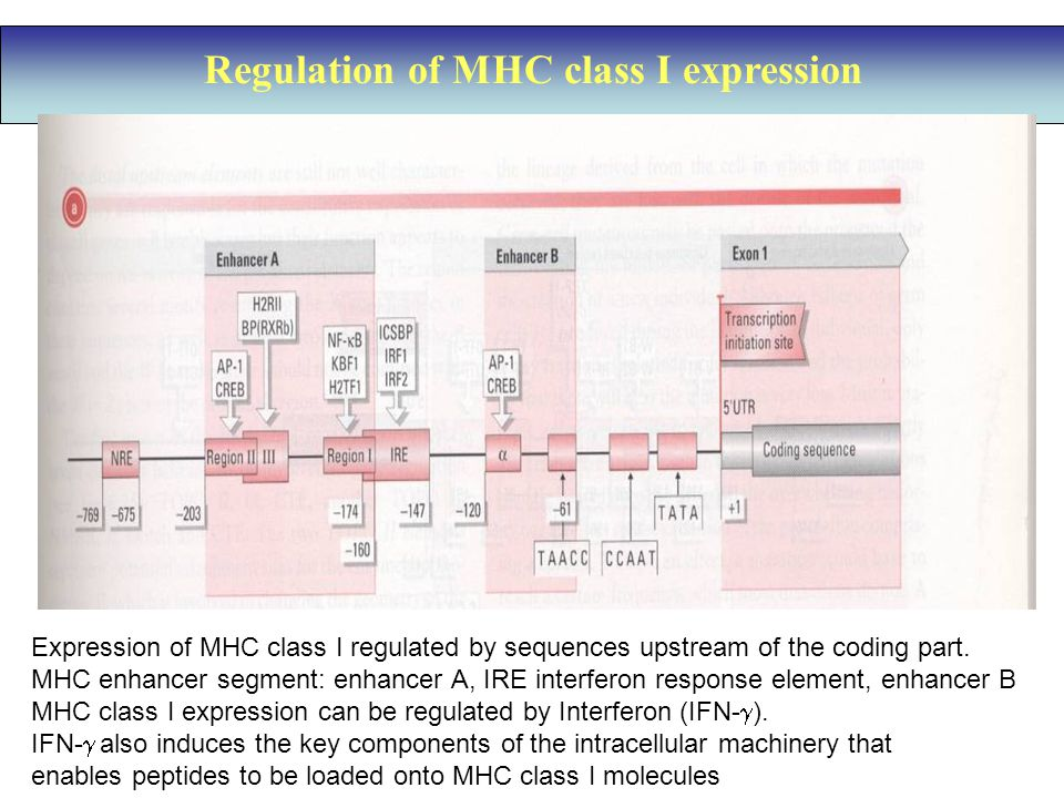 Regulation of MHC class I expression