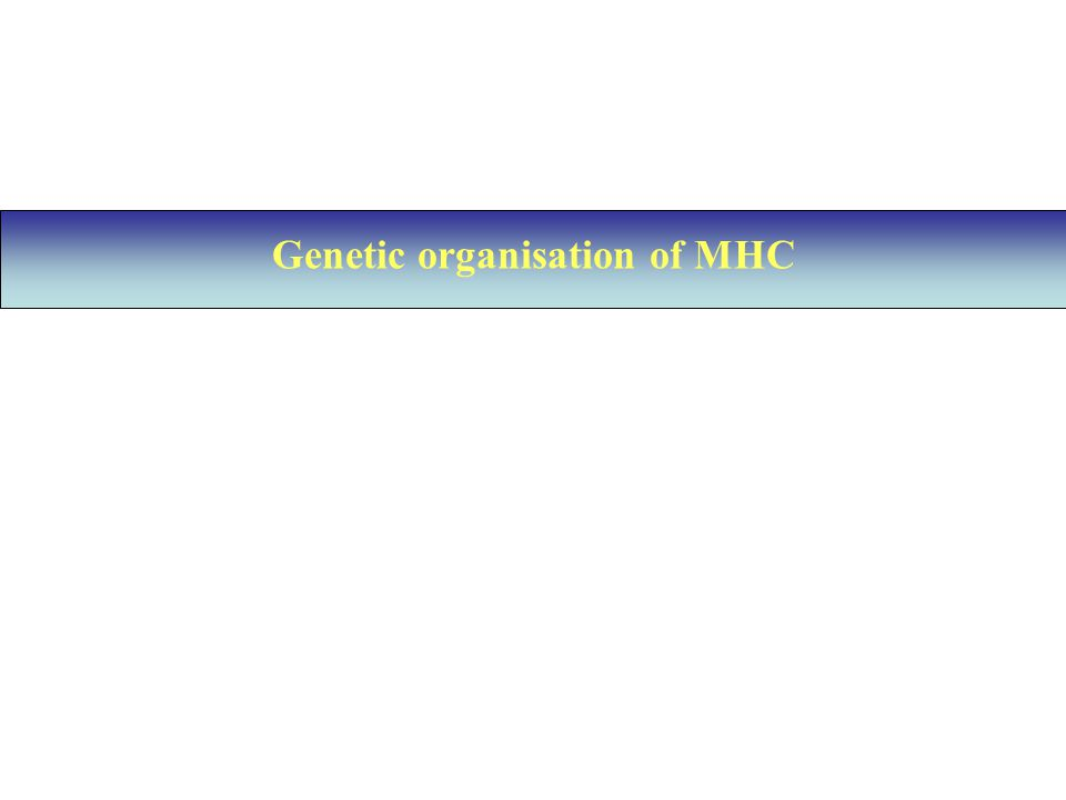 Genetic organisation of MHC