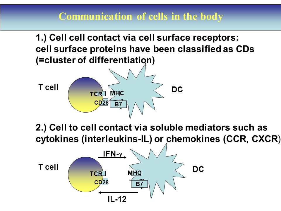 Communication of cells in the body