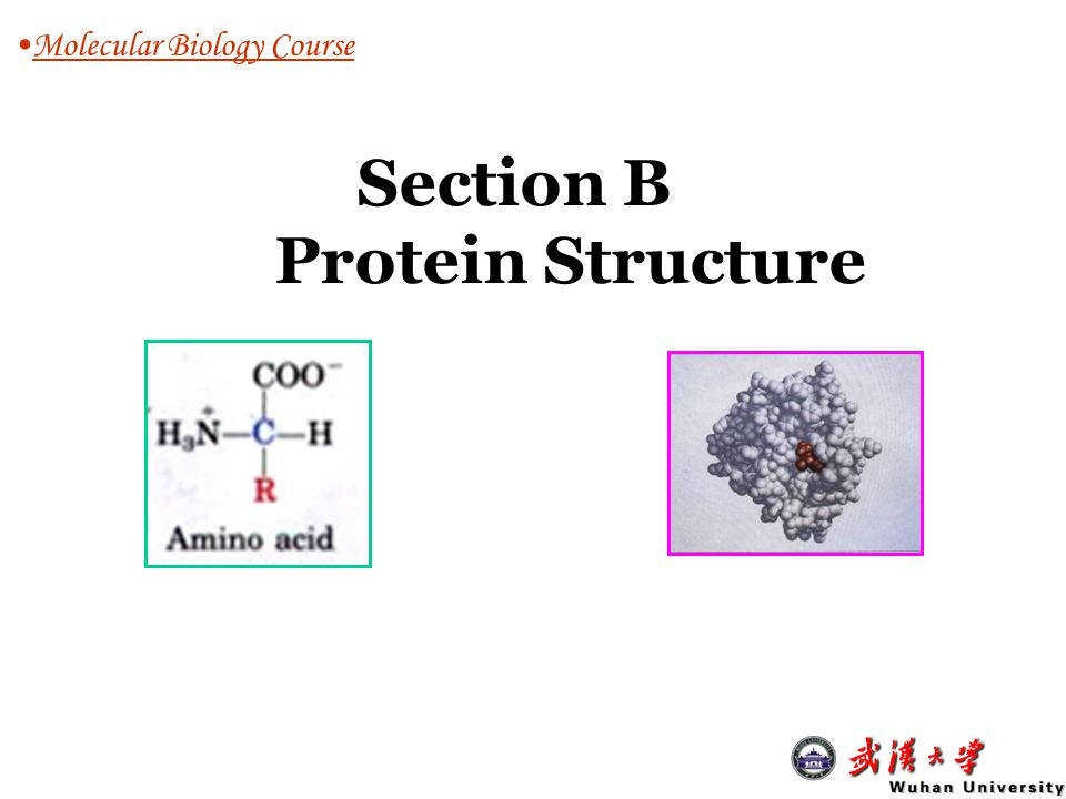 a level biology coursework structure