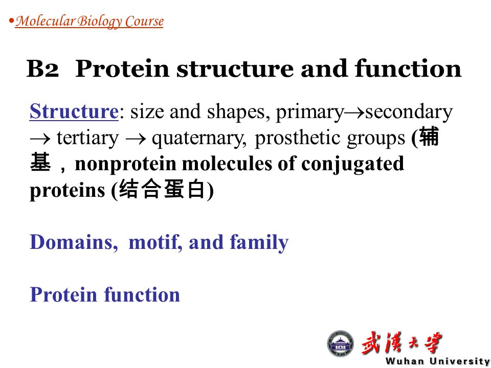 B2 Protein structure and function