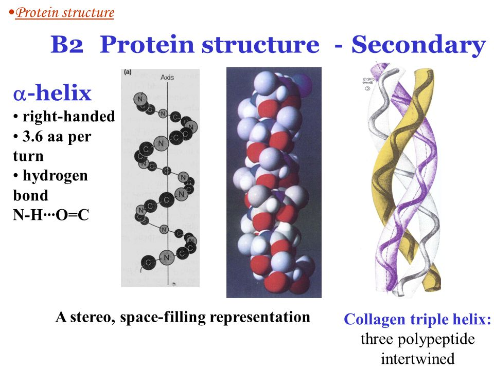 B2 Protein structure -Secondary