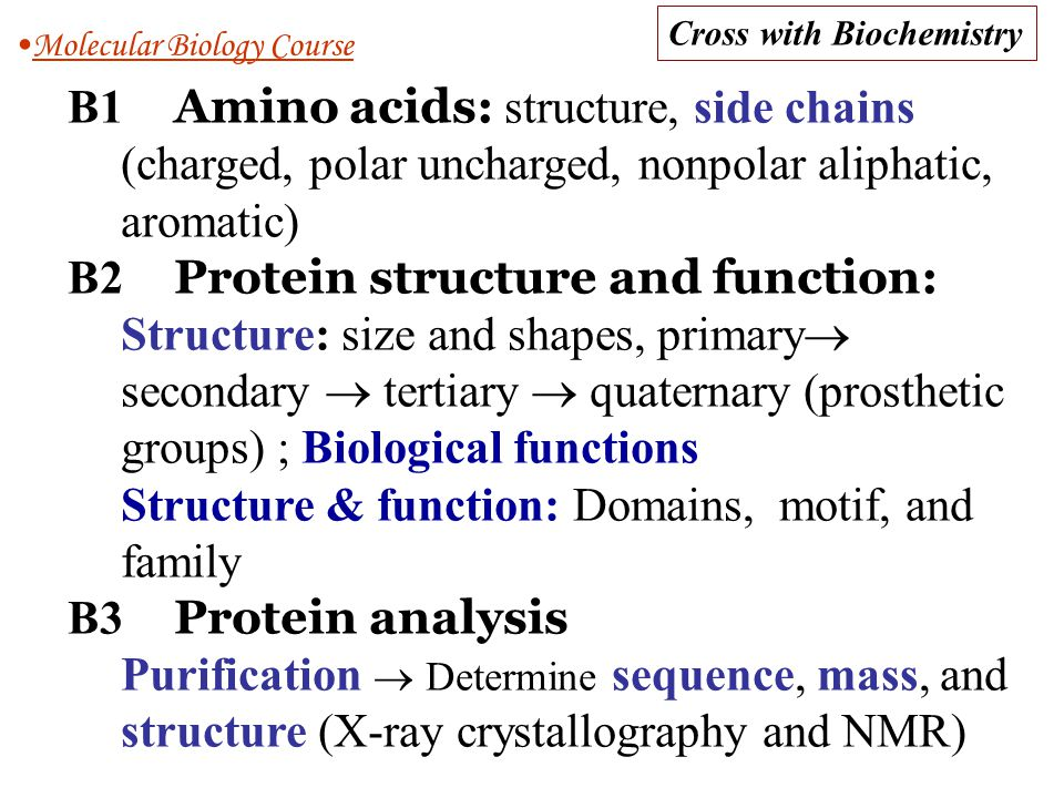 B2 Protein structure and function: