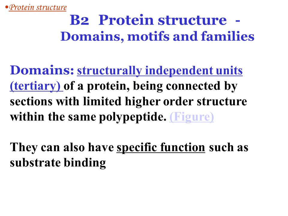 B2 Protein structure - Domains, motifs and families