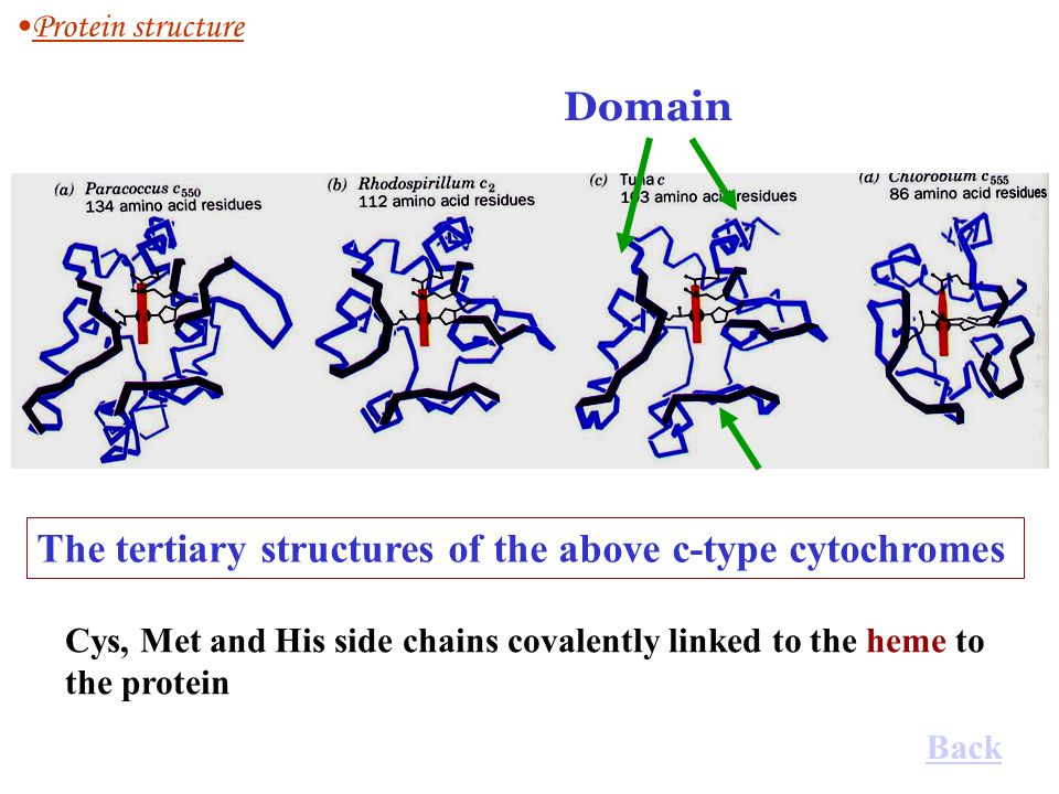 The tertiary structures of the above c-type cytochromes